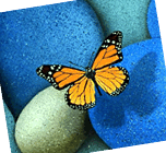 Butterfly Rocks Web Designing